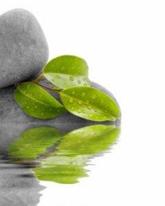 SPIRULINES GREEN TREATMENT