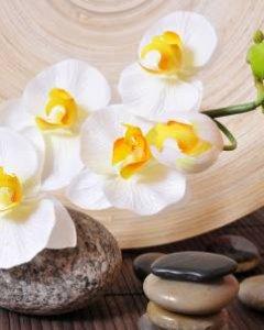 Ayurveda ABHYANGA Massage