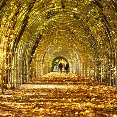 Autumn iodising