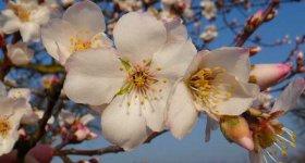Frühlingsgefühle 5 Nächte