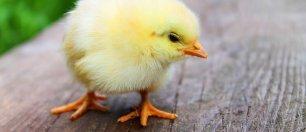 Rodzinna Wielkanoc po lubelsku- 1 doba