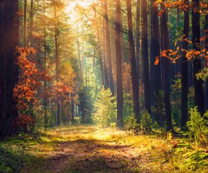 Złota jesień w Puszczykowie