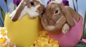 Pobyt Wielkanocny