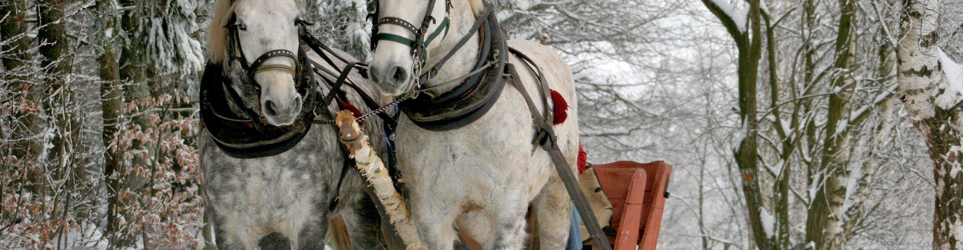 Ferie na Dolnym Śląsku | 4 dni i więcej