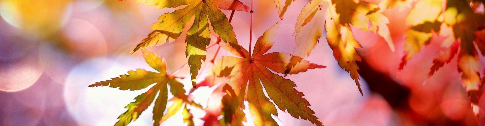 Piękna Polska Jesień   3 dni