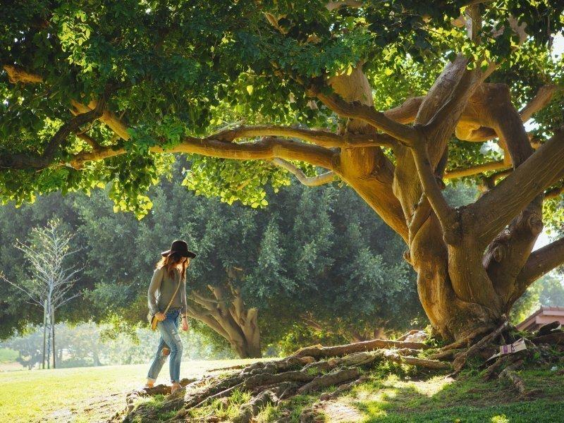 Magiczny Ogród Arboretum | 3 dni