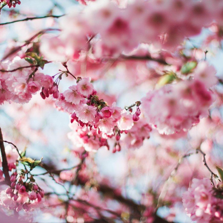 Wiosenne Porządki | 3 dni