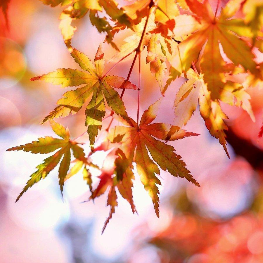 Piękna Polska Jesień | 3 dni
