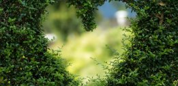 ZIELONE LASKOWE LOVE ♥