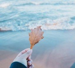 Herbst am Meer