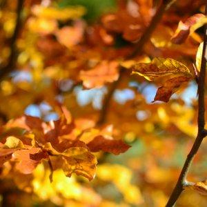Jesienią   w Zakopanem    -      Pakiet HB