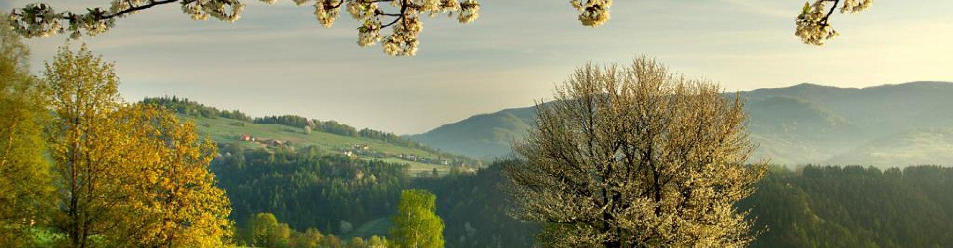 Wiosna w Beskidach