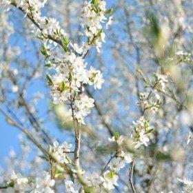 Kwiecień  Mazury