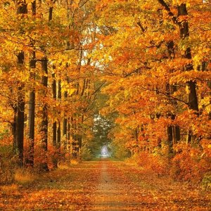 Sinnlicher Herbst - Indian Summer