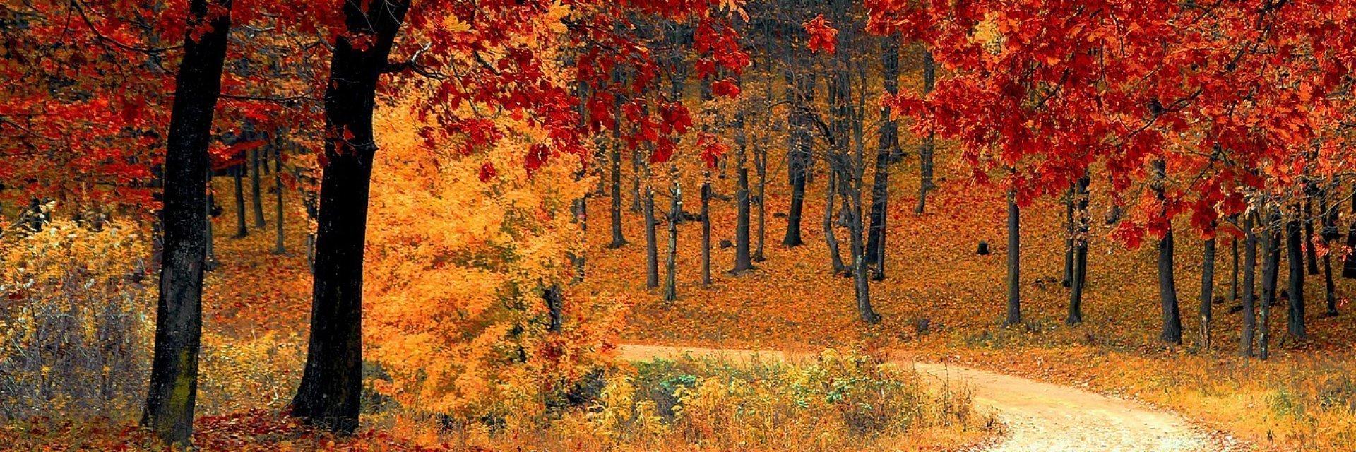 Jesień w Bieszczadach 2021