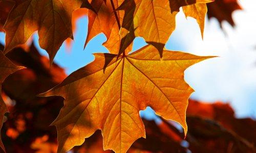 Jesienny pobyt na Podlasiu