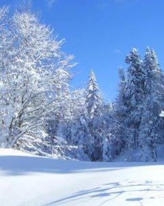Hinduska zima