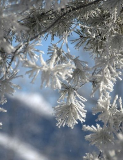 Glückseliger Winter