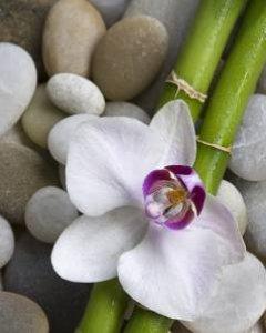 Refleksyjny masaż tajski stóp i dłoni 60 min.