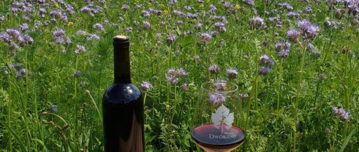 A weekend in the Dwórzno Vineyard