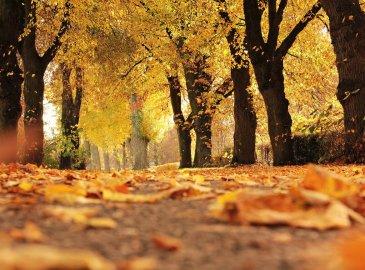 Jesienny odpoczynek w Villi Art Novis