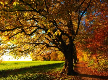 Jesień w Villa Art Novis