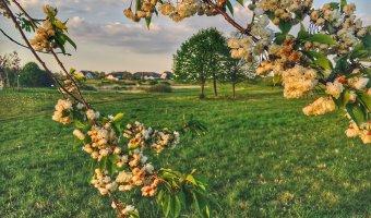 Balmer Golf-Frühling