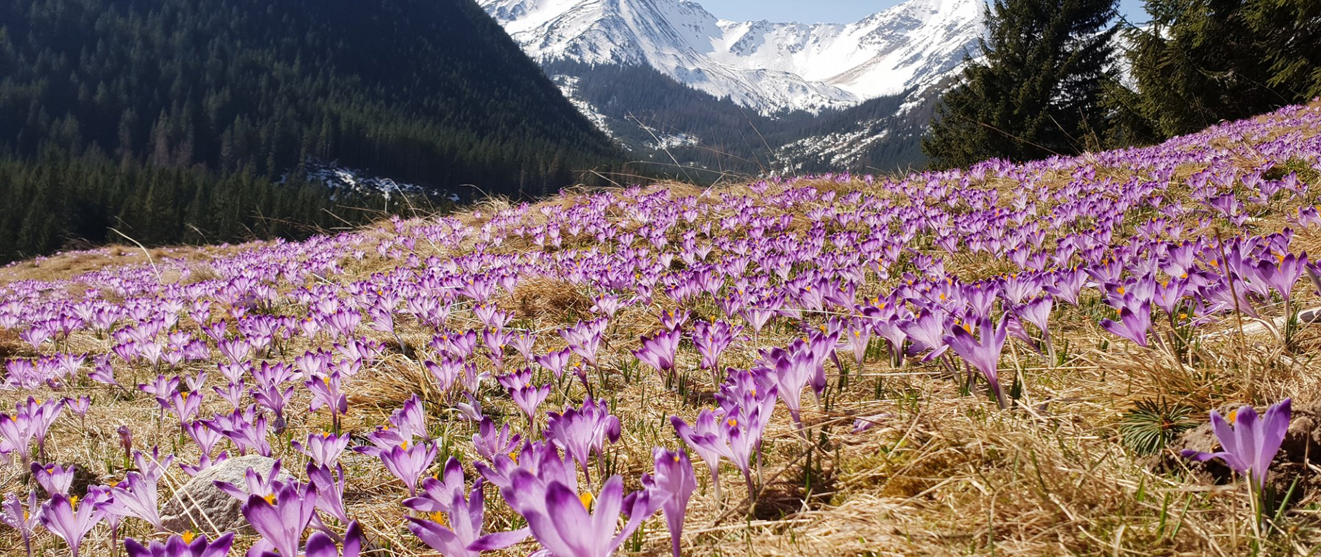 Wiosna w Bellamonte -15%
