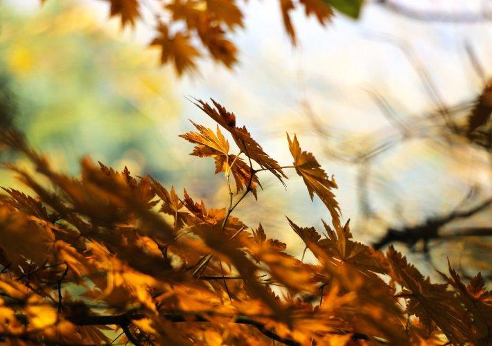 Jesienny pobyt w Beskidzkim Raju