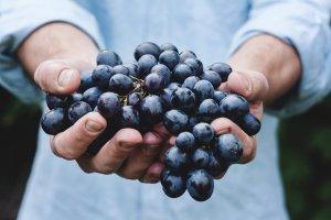 Wein-Wandern-Wellness