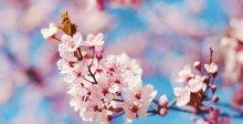 Wiosenne przebudzenie