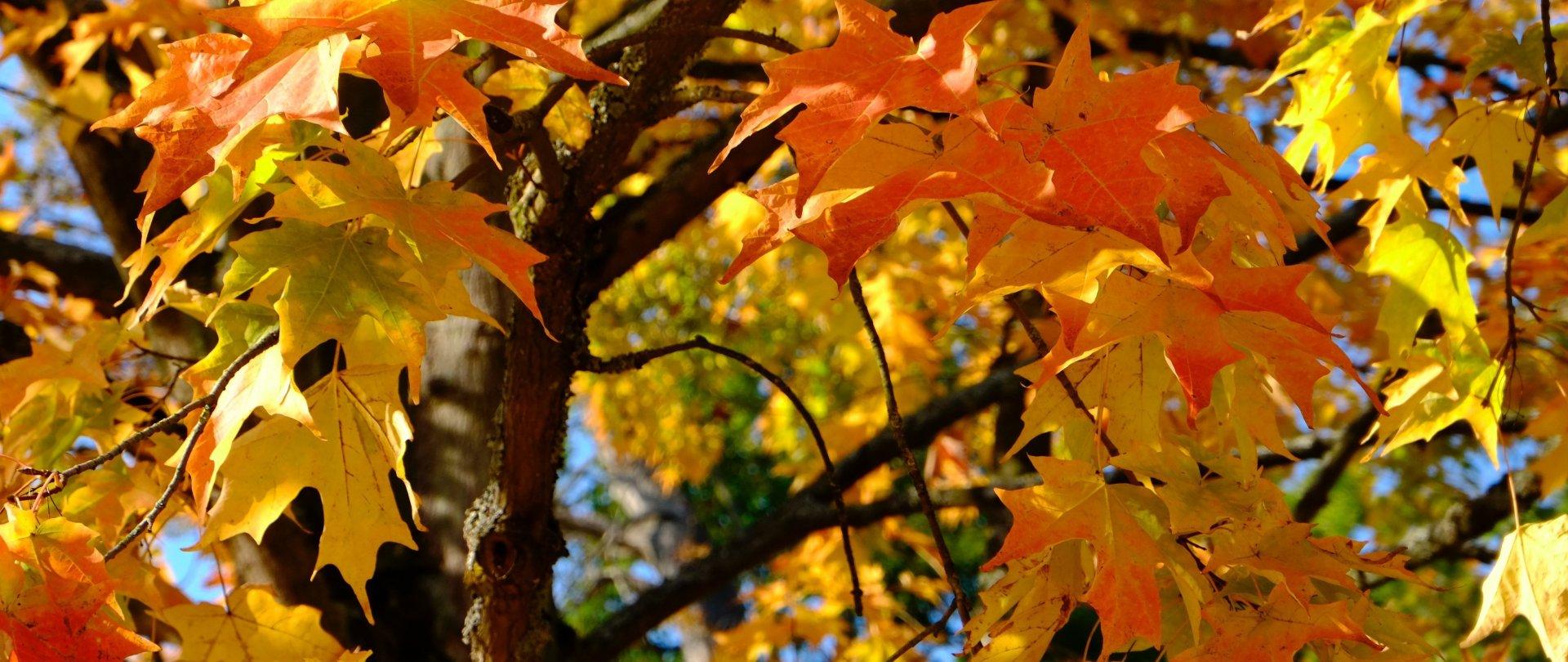 Let's celebrate autumn in Krakow