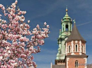 Let's meet  magic Spring in Krakow/Spotkaj magiczną Wiosnę w Krakowie