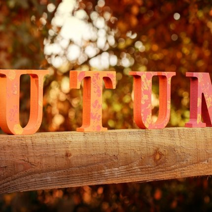 Autumn in Torun!