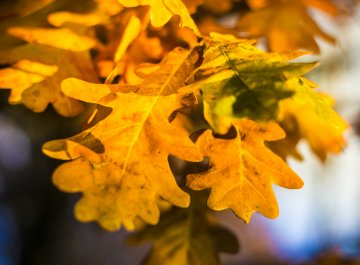 Jesienny urlop