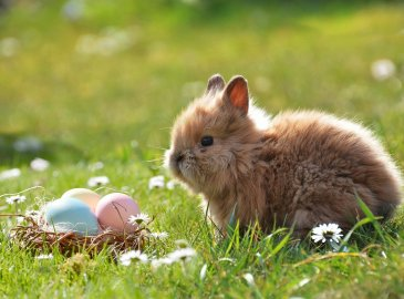 Góralska Oferta Wielkanocna