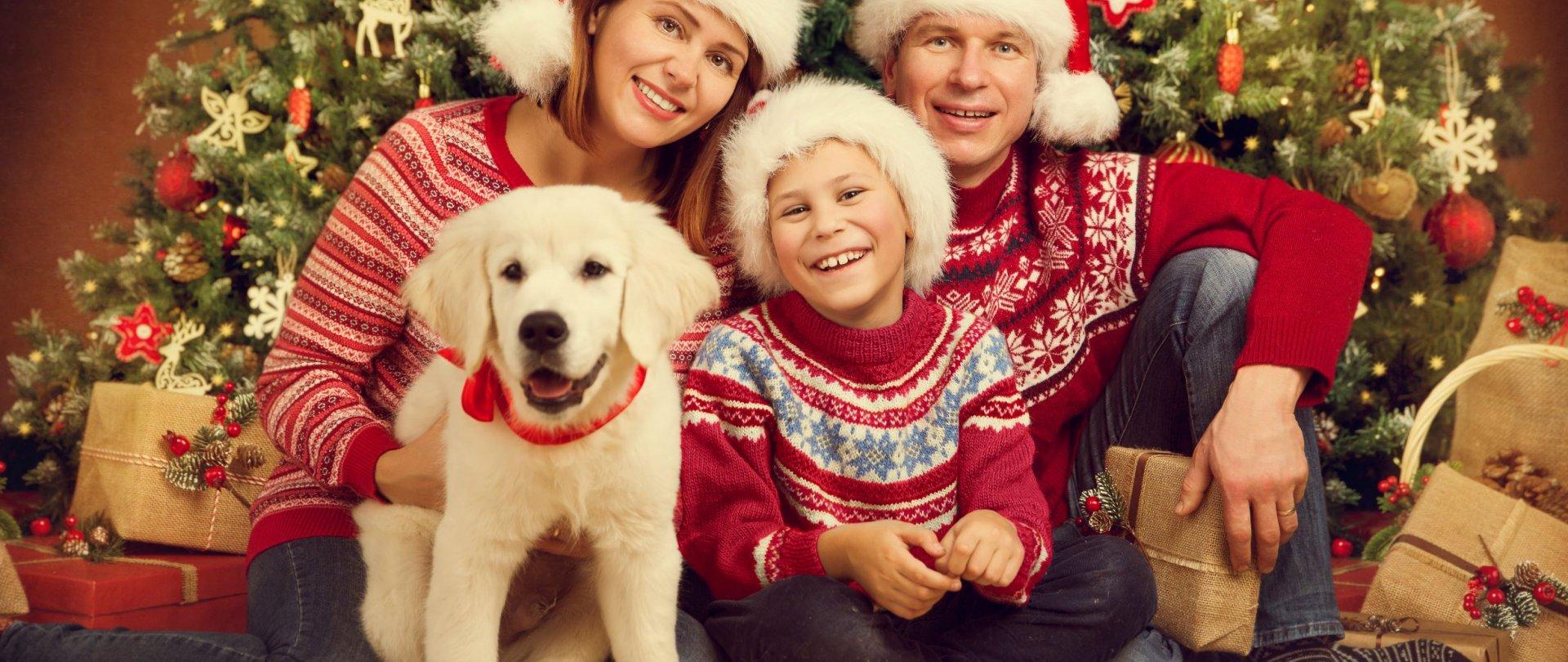 Boże Narodzenie w Enklawie. Cudowne Rodzinne Święta w Puszczy Białowieskiej!