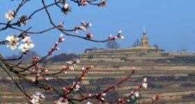 Leben wie Gott in der Pfalz für 2 Personen