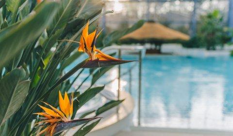 Wiosna w Binkowski Resort z Basenami Tropikalnymi