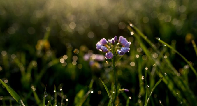 Wiosna w BUKOVINIE