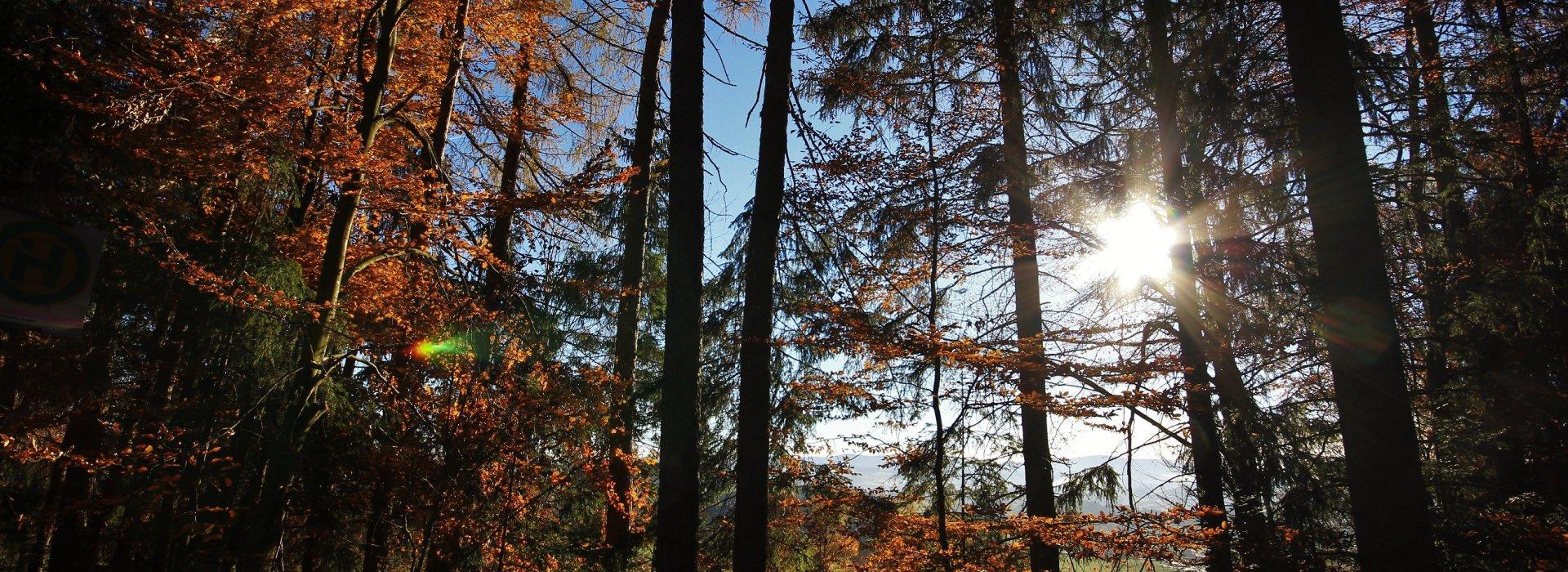 Bunte Herbstwoche