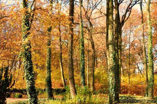 Autumn Renewal