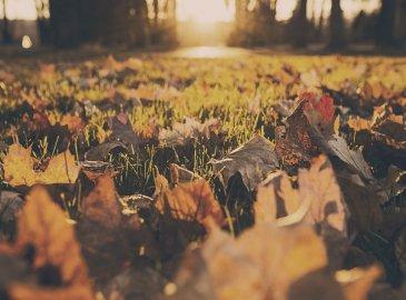 Goldener Oktober (3 Übernachtungen)
