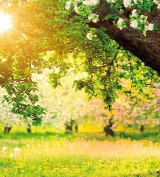 Poszukaj wiosny w Sopocie