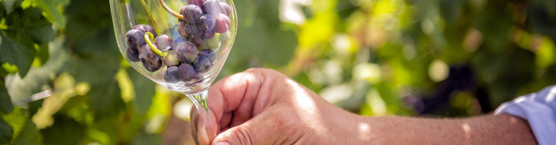 Niemcza z winem | 2 noce i więcej