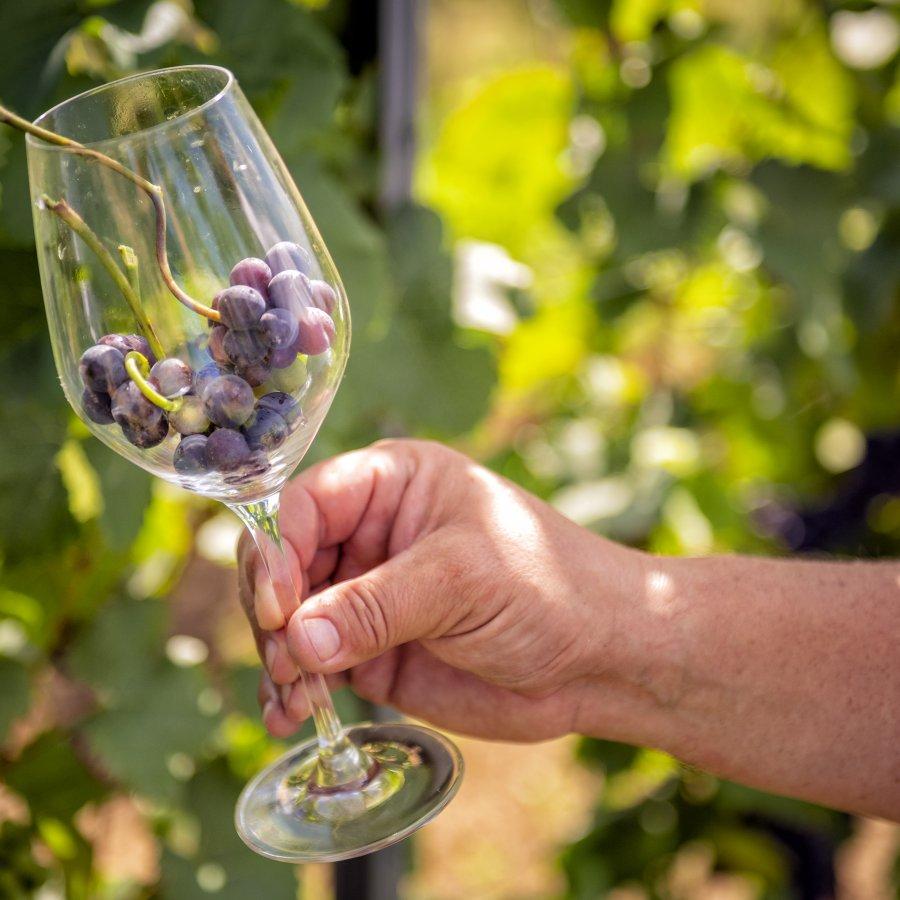 Niemcza z winem | 3 dni i więcej