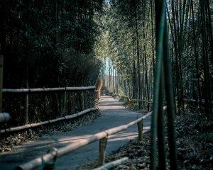 Masaż Bambusami