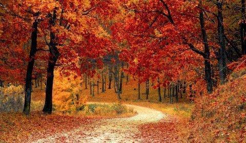 Kolory jesieni w Wiśle - masaż GRATIS!