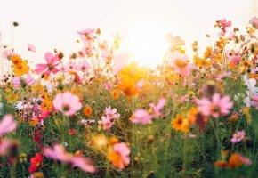 Spring Regeneration
