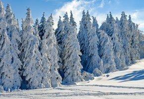 Zimowa Rozkosz